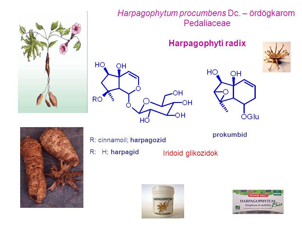 Harpagophytum procumbens Dc