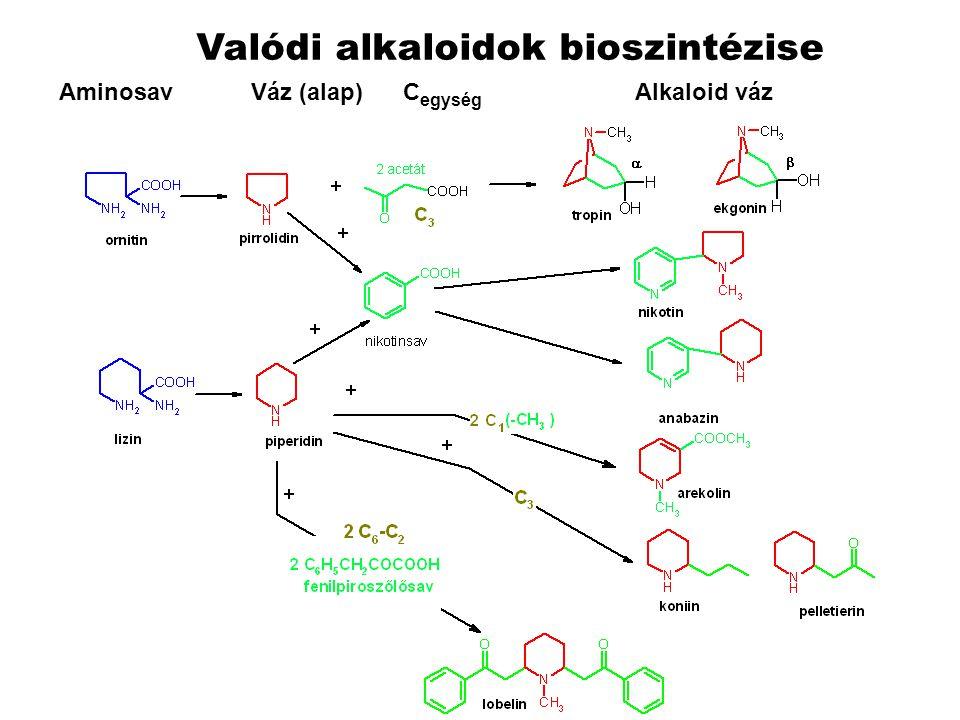 Valódi alkaloidok bioszintézise