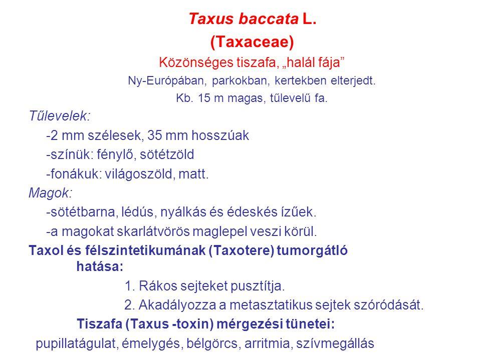 """Taxus baccata L. (Taxaceae) Közönséges tiszafa, """"halál fája"""