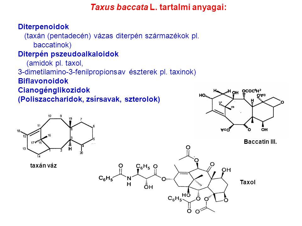 Taxus baccata L. tartalmi anyagai: