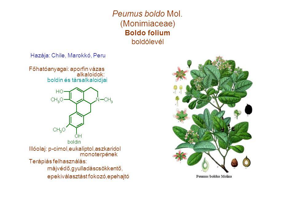 Peumus boldo Mol. (Monimiaceae) Boldo folium boldólevél