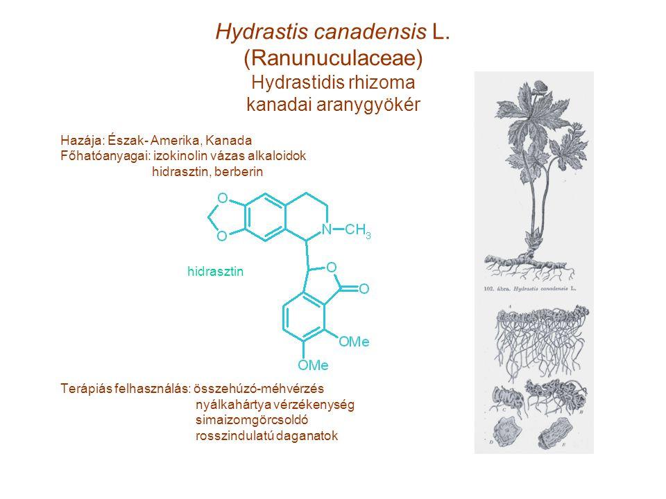 Hydrastis canadensis L