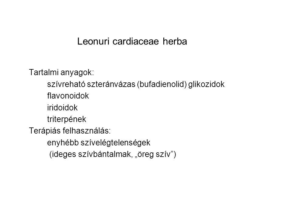 Leonuri cardiaceae herba