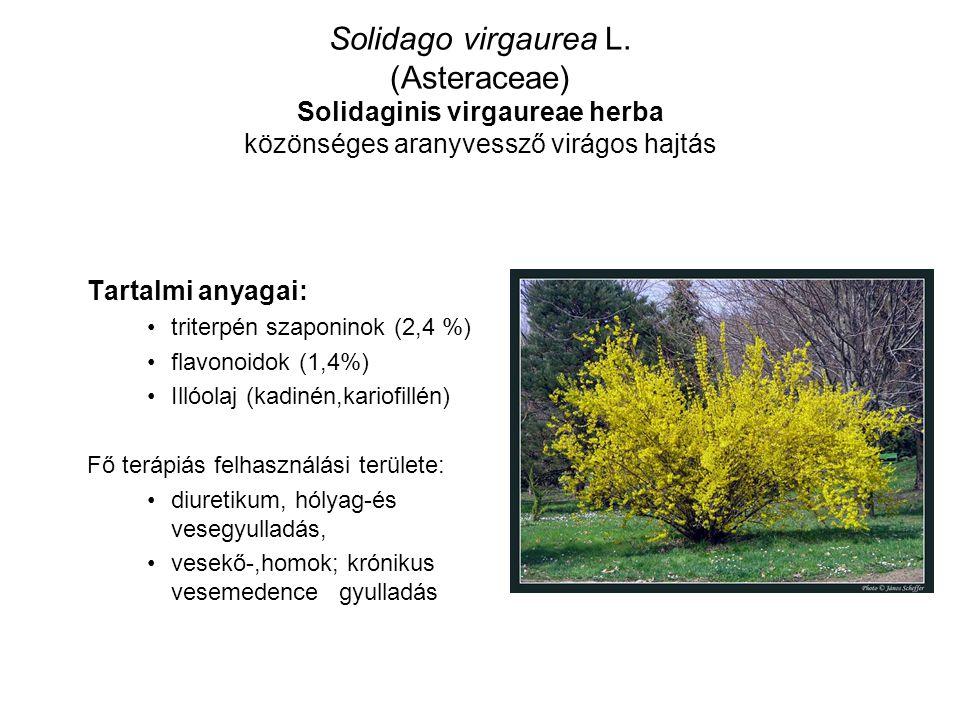 Solidago virgaurea L. (Asteraceae) Solidaginis virgaureae herba közönséges aranyvessző virágos hajtás