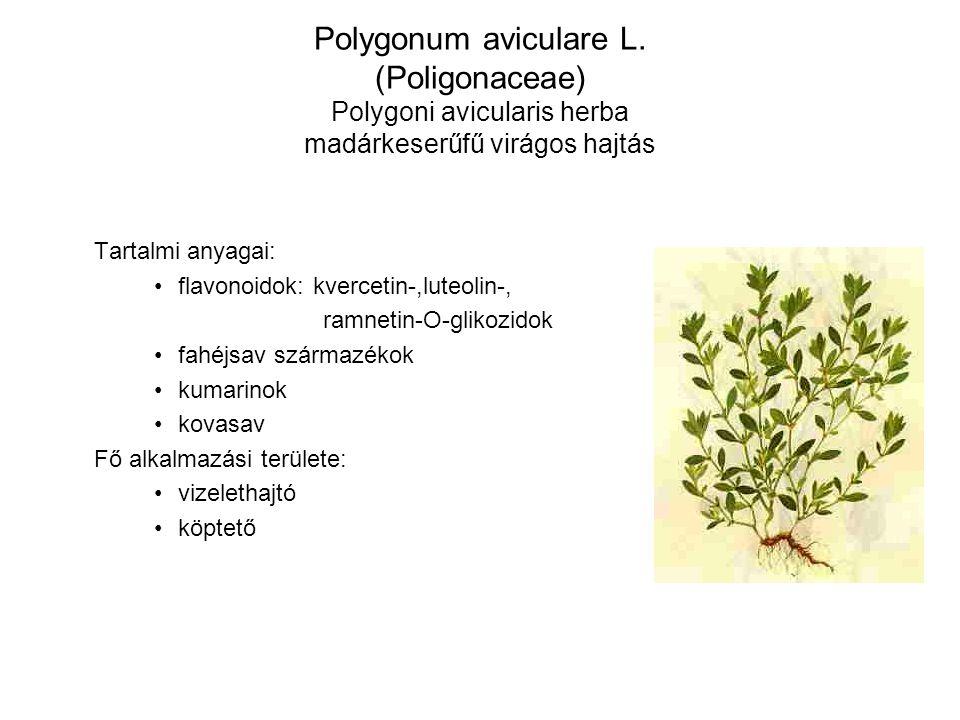 Polygonum aviculare L. (Poligonaceae) Polygoni avicularis herba madárkeserűfű virágos hajtás
