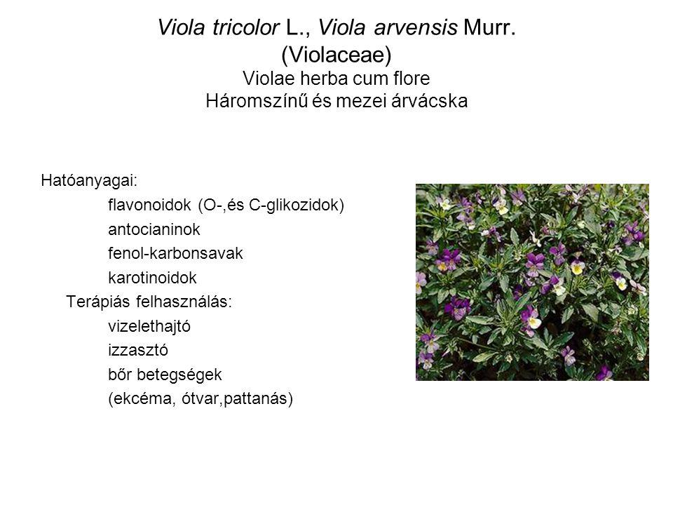 Viola tricolor L. , Viola arvensis Murr