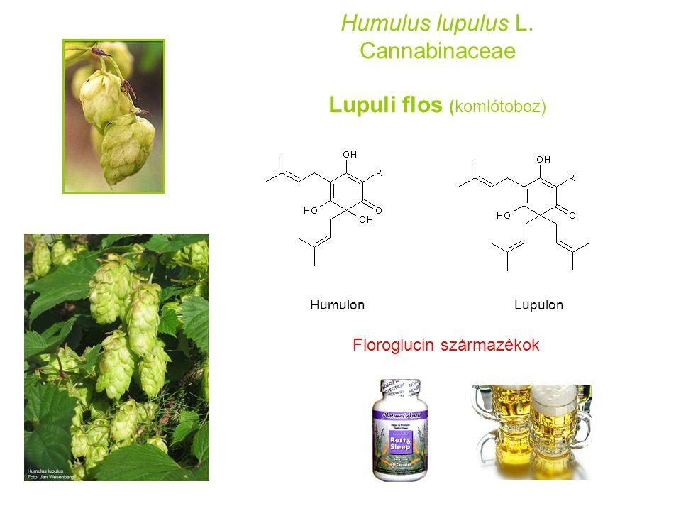 Humulus lupulus L. Cannabinaceae Lupuli flos (komlótoboz)
