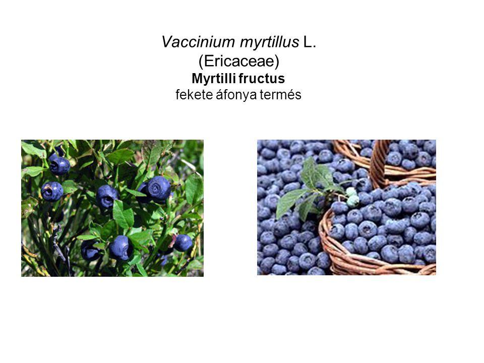 Vaccinium myrtillus L. (Ericaceae) Myrtilli fructus fekete áfonya termés