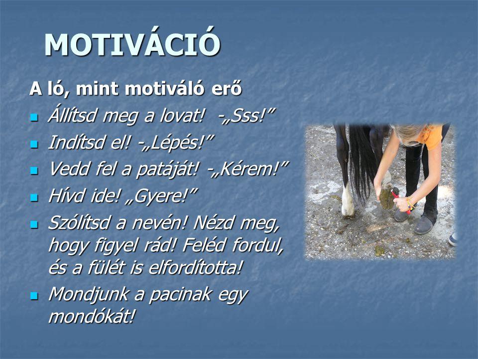 """MOTIVÁCIÓ A ló, mint motiváló erő Állítsd meg a lovat! -""""Sss!"""