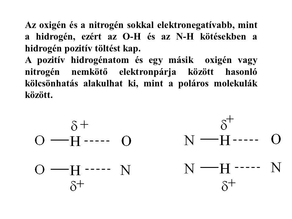 Az oxigén és a nitrogén sokkal elektronegatívabb, mint a hidrogén, ezért az O-H és az N-H kötésekben a hidrogén pozitív töltést kap.
