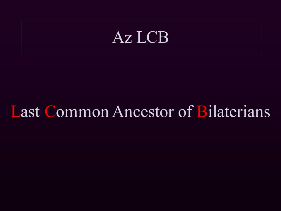 Az LCB Last Common Ancestor of Bilaterians