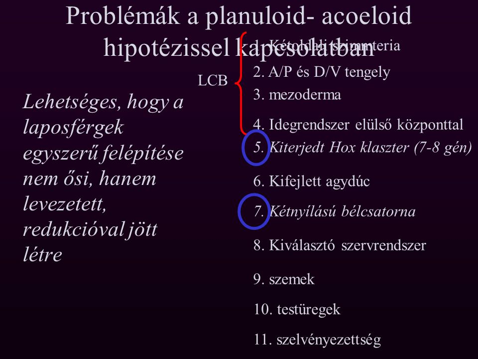 Problémák a planuloid- acoeloid hipotézissel kapcsolatban