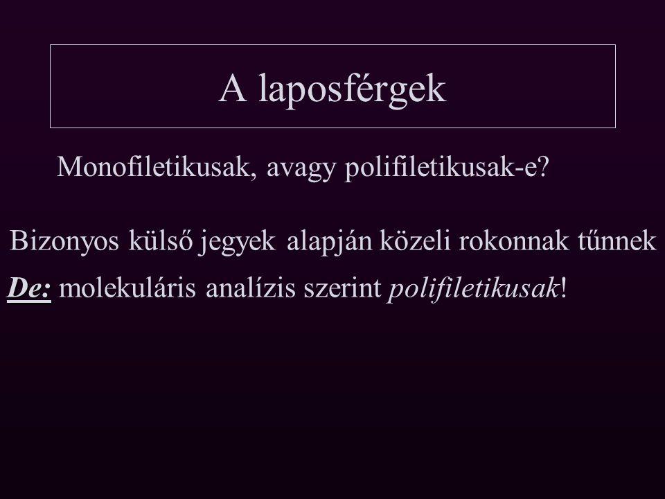 A laposférgek Monofiletikusak, avagy polifiletikusak-e