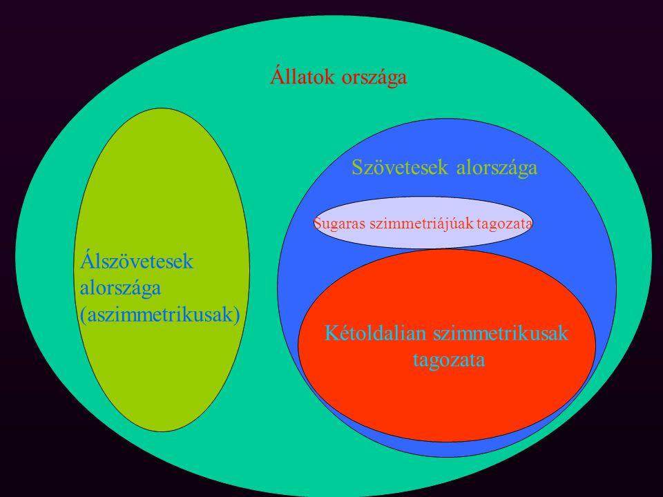 Álszövetesek alországa (aszimmetrikusak) Szövetesek alországa