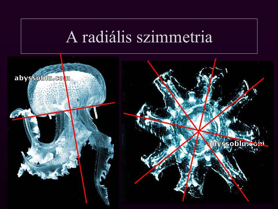 A radiális szimmetria