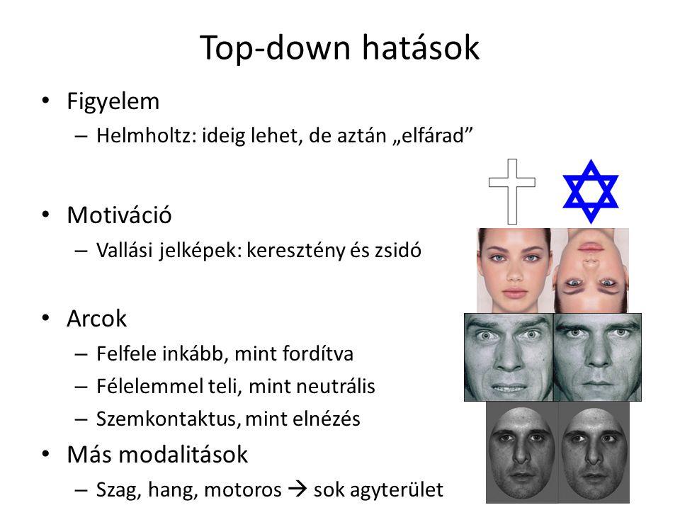 Top-down hatások Figyelem Motiváció Arcok Más modalitások