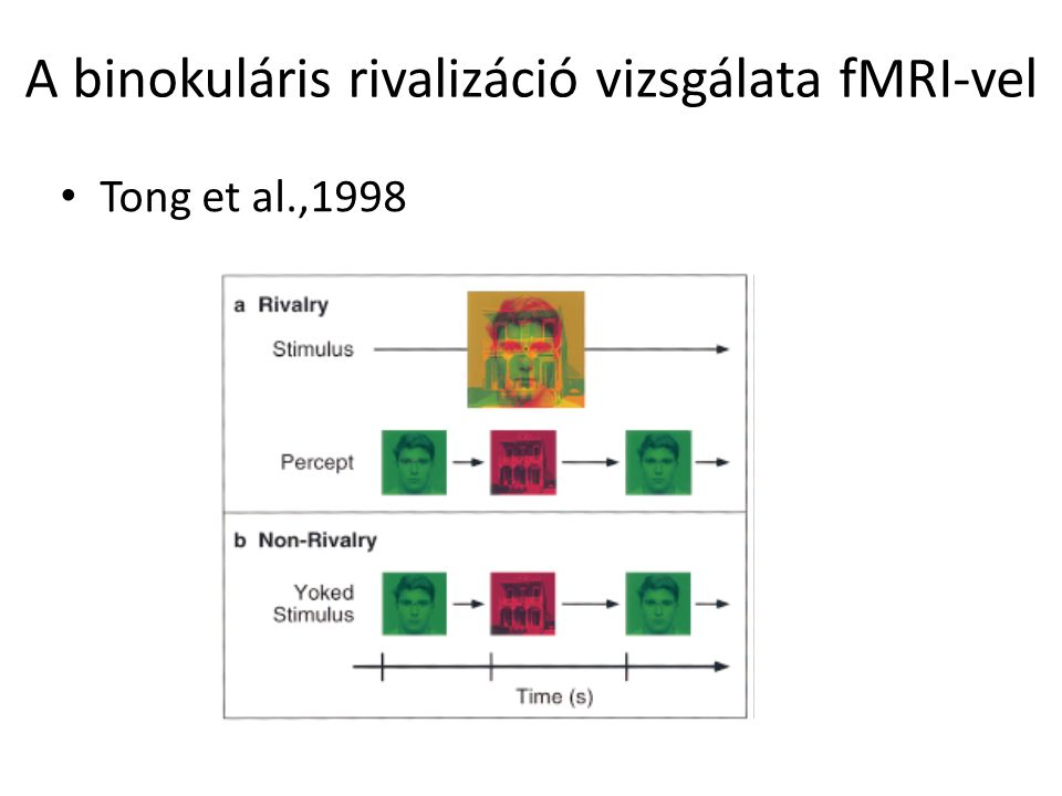 A binokuláris rivalizáció vizsgálata fMRI-vel