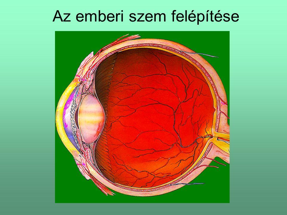 Az emberi szem felépítése