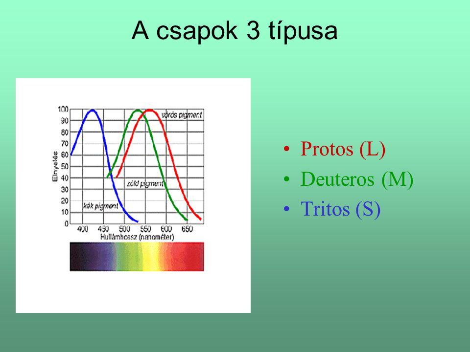 A csapok 3 típusa Protos (L) Deuteros (M) Tritos (S)