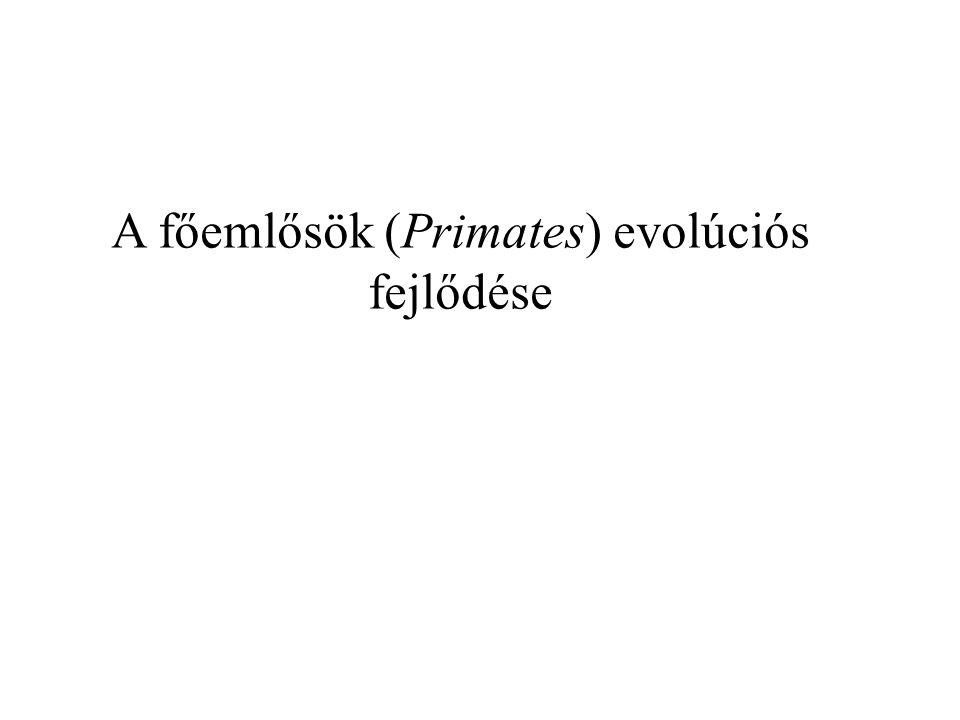 A főemlősök (Primates) evolúciós fejlődése