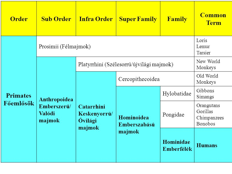 Order Sub Order Infra Order Super Family Family Common Term Primates