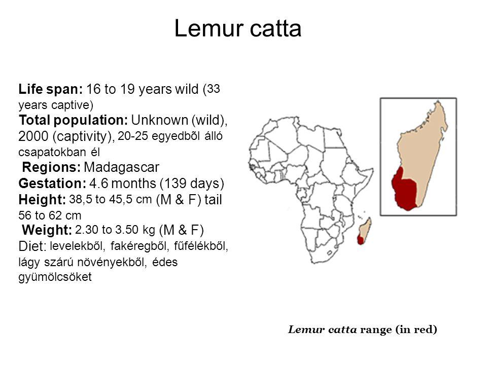 Lemur catta Life span: 16 to 19 years wild (33 years captive)