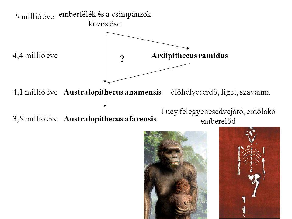 Australopithecus anamensis Australopithecus afarensis