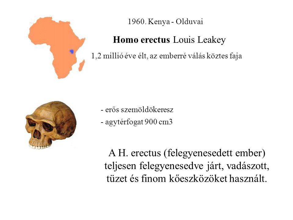 1960. Kenya - Olduvai Homo erectus Louis Leakey. 1,2 millió éve élt, az emberré válás köztes faja.
