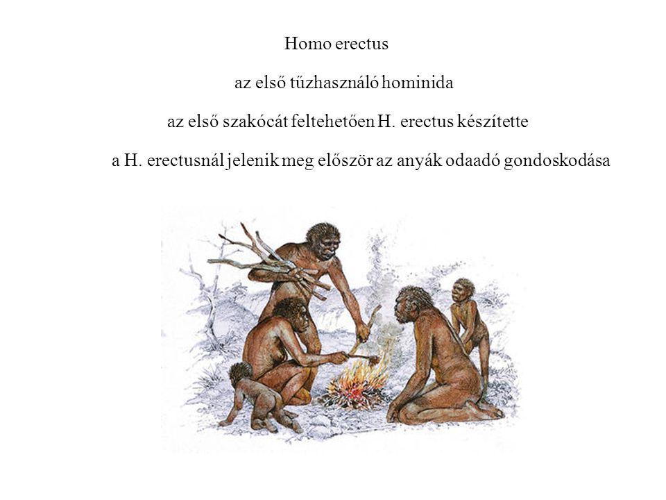 az első tűzhasználó hominida