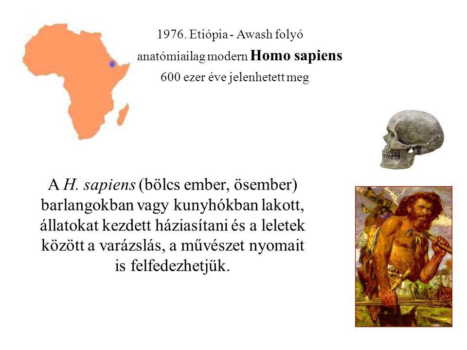 1976. Etiópia - Awash folyó anatómiailag modern Homo sapiens. 600 ezer éve jelenhetett meg.