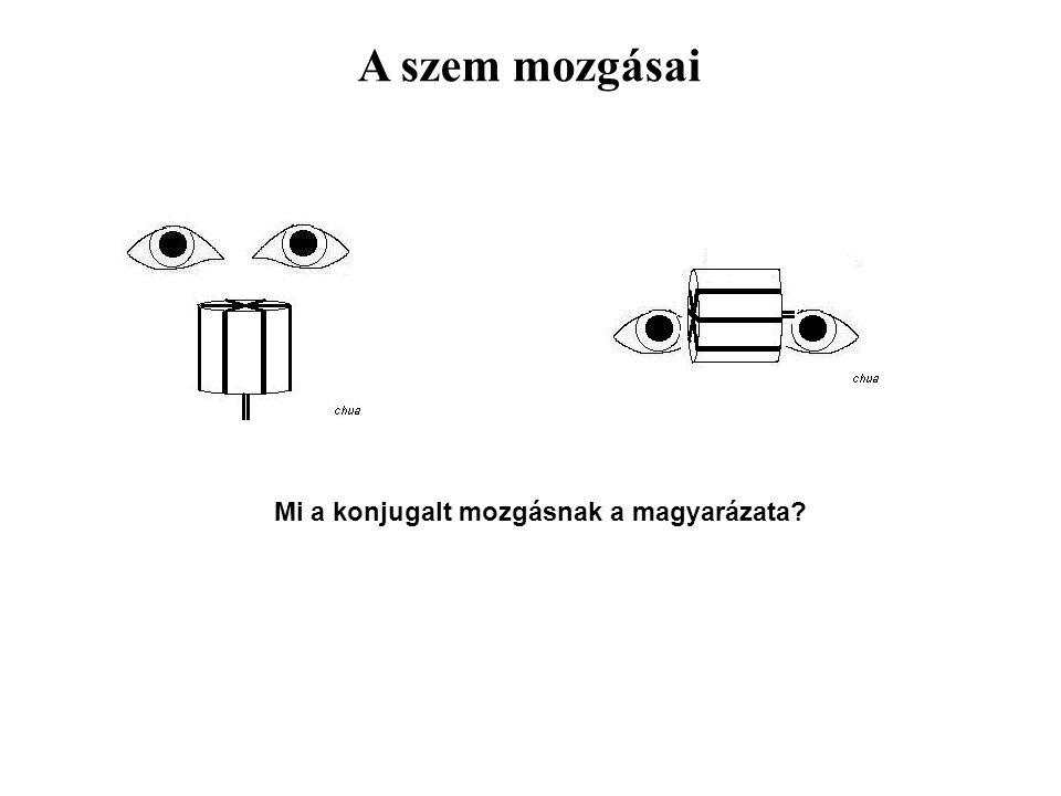 A szem mozgásai Mi a konjugalt mozgásnak a magyarázata