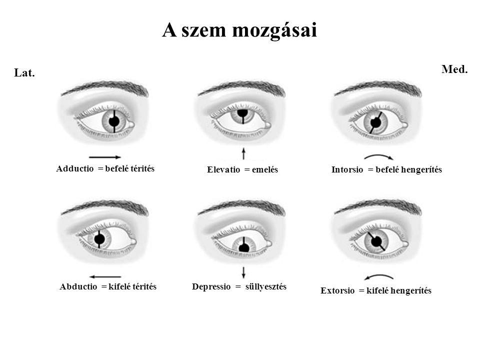 A szem mozgásai Med. Lat. Adductio = befelé térités Elevatio = emelés
