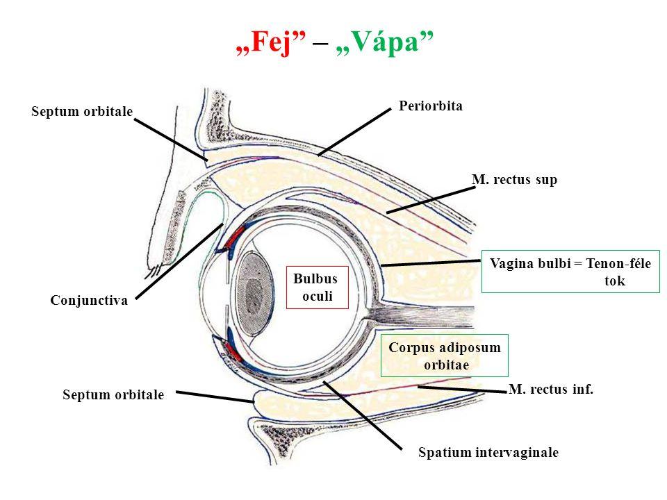 Vagina bulbi = Tenon-féle Spatium intervaginale
