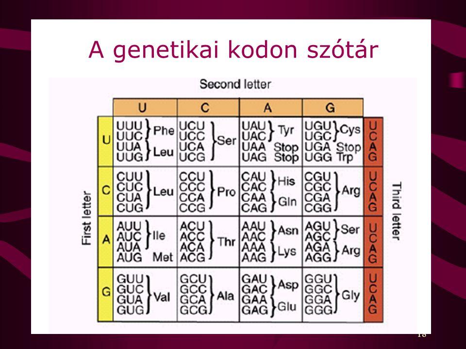 A genetikai kodon szótár
