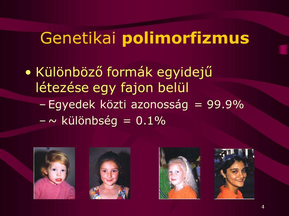 Genetikai polimorfizmus