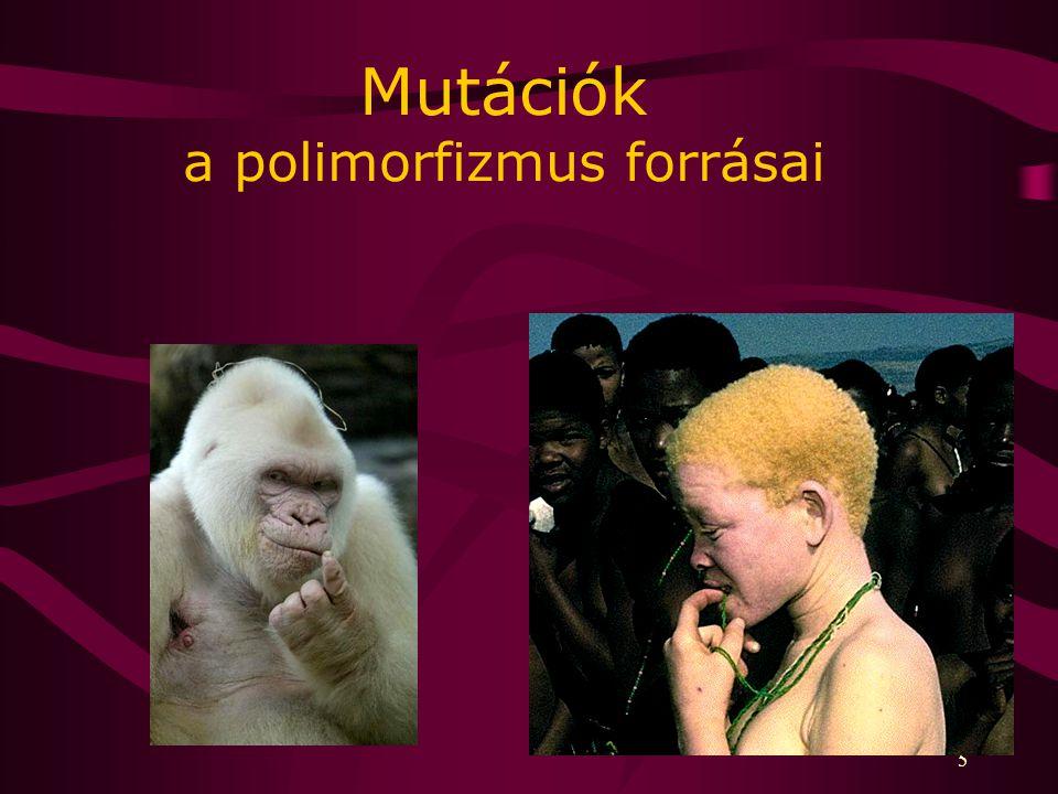 Mutációk a polimorfizmus forrásai