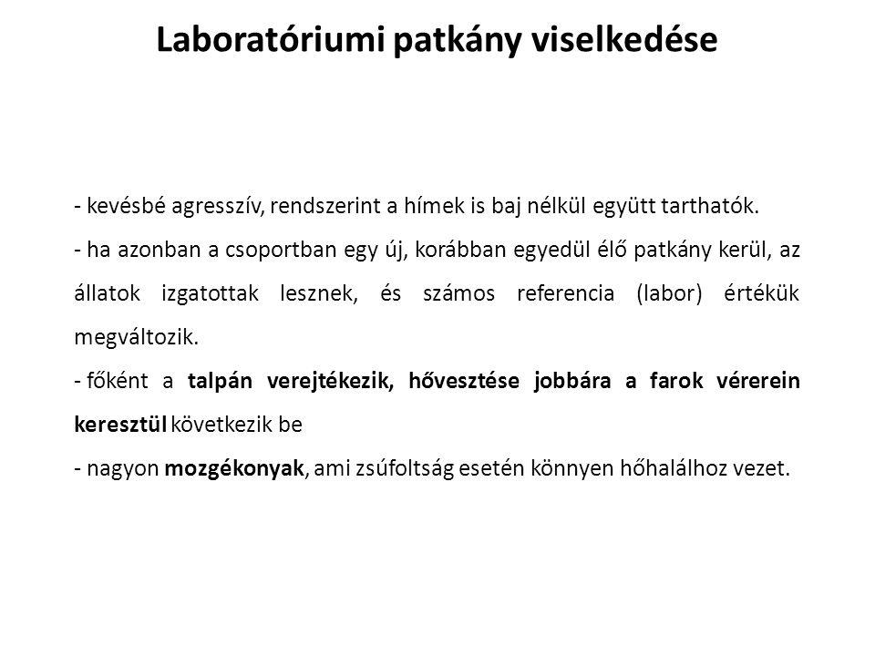 Laboratóriumi patkány viselkedése