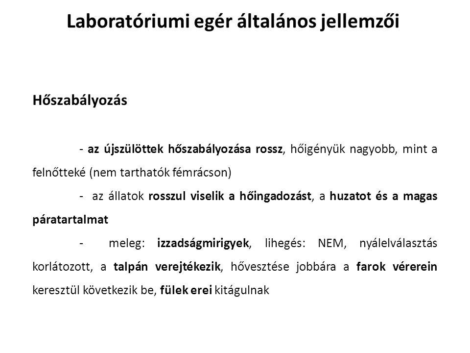 Laboratóriumi egér általános jellemzői