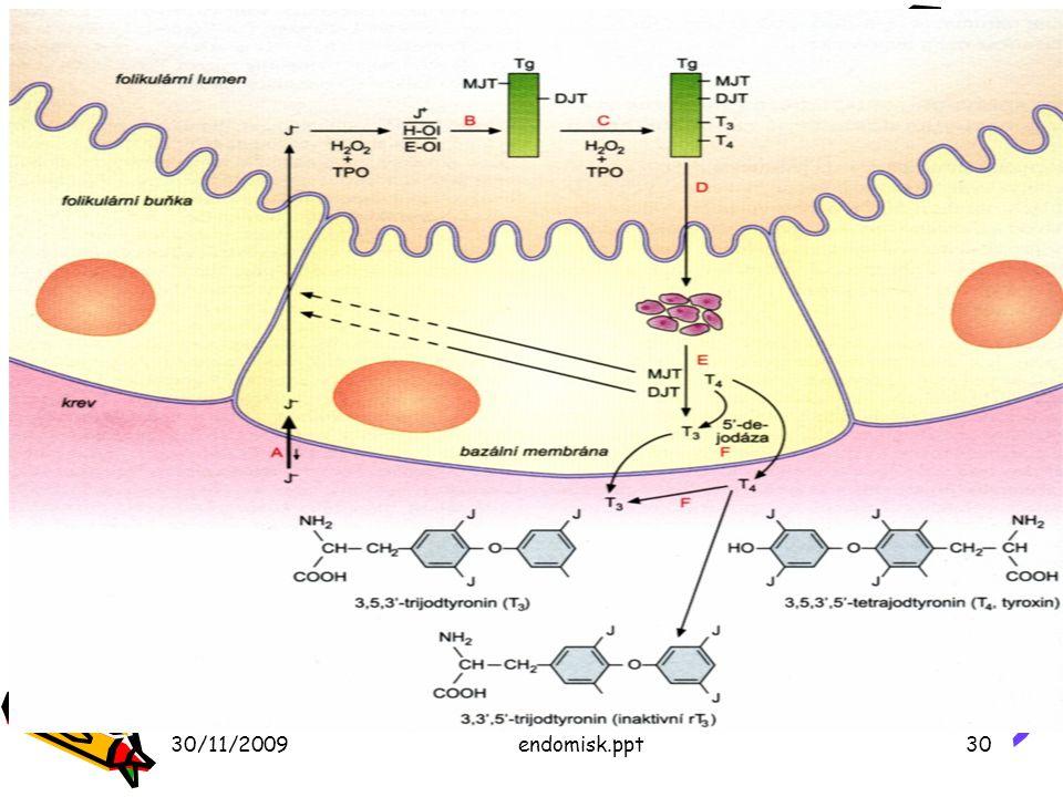 Syntéza hormonov štítnej žľazy