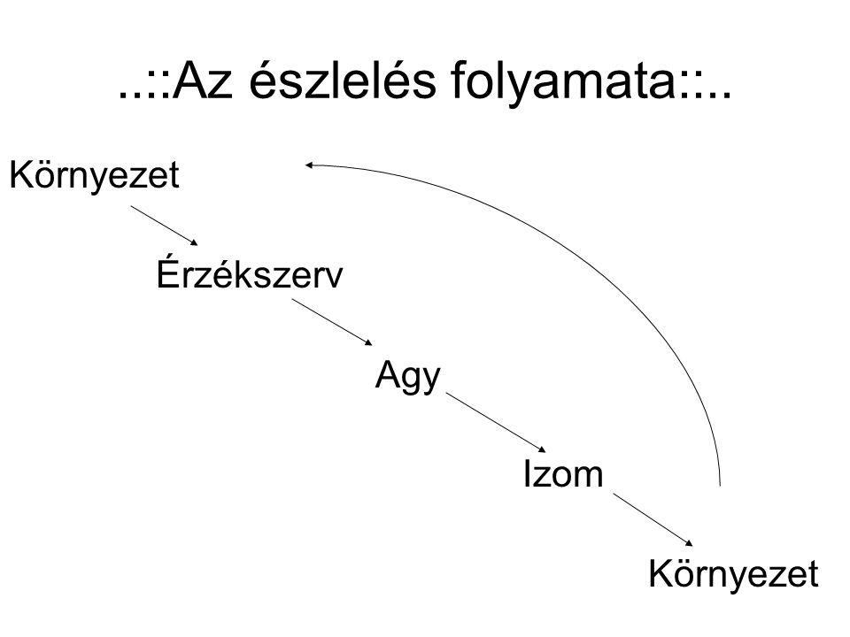 ..::Az észlelés folyamata::..
