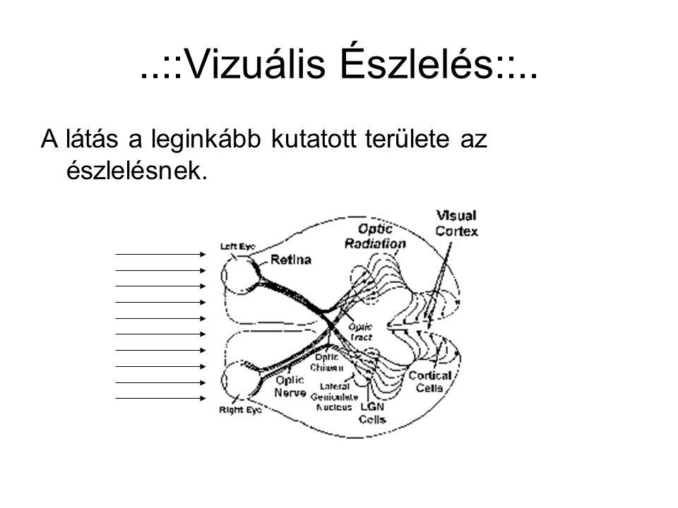 ..::Vizuális Észlelés::..