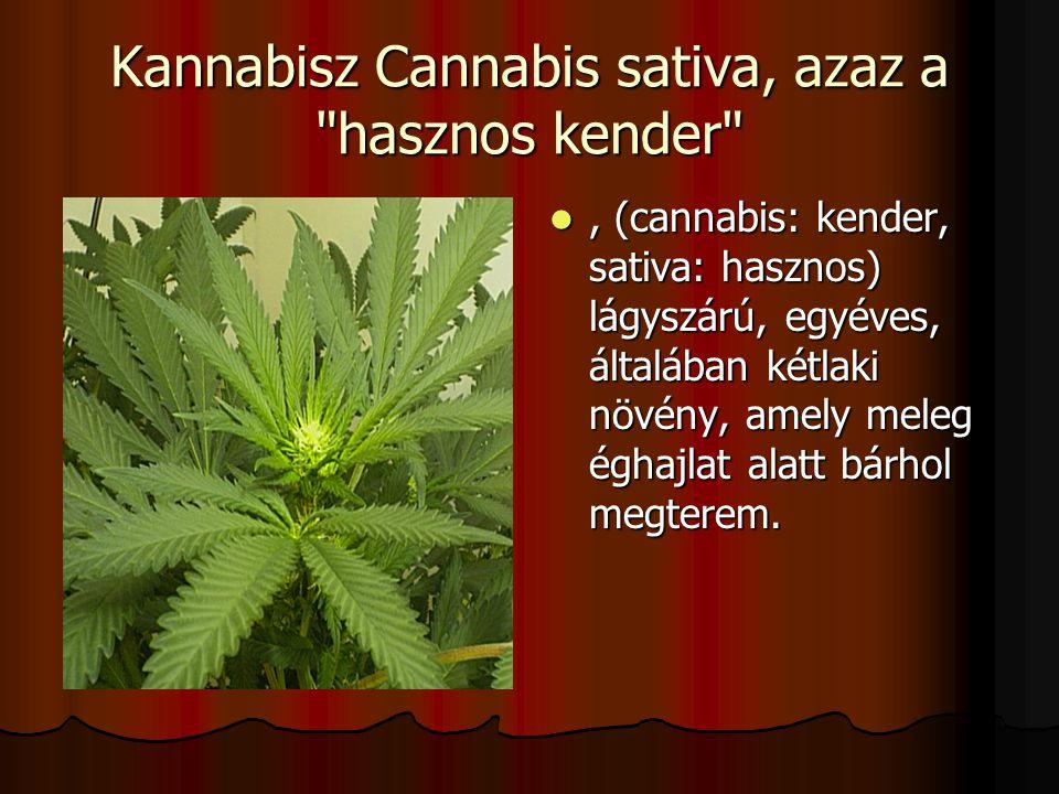 Kannabisz Cannabis sativa, azaz a hasznos kender