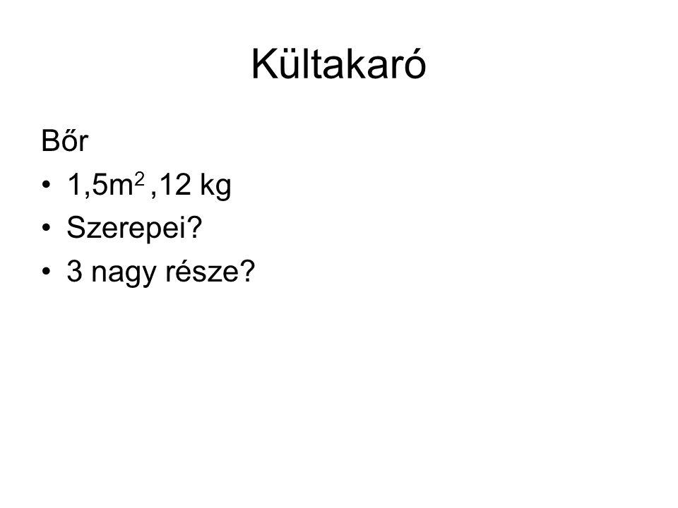 Kültakaró Bőr 1,5m2 ,12 kg Szerepei 3 nagy része