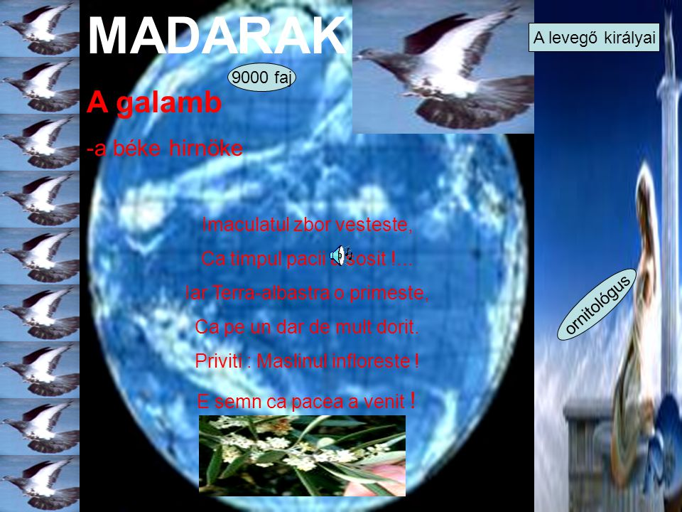 MADARAK A galamb -a béke hirnöke Imaculatul zbor vesteste,