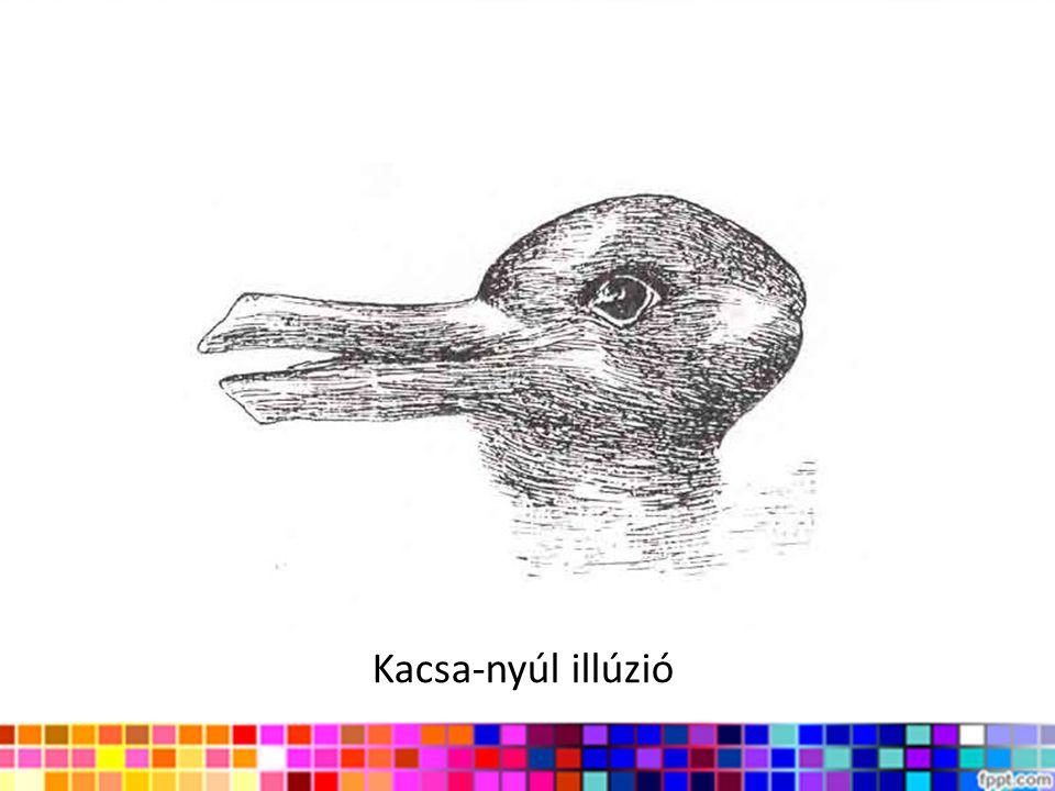 Kacsa-nyúl illúzió