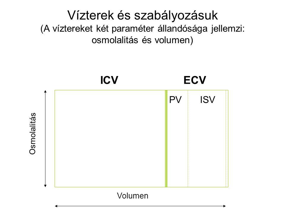Vízterek és szabályozásuk (A víztereket két paraméter állandósága jellemzi: osmolalitás és volumen)