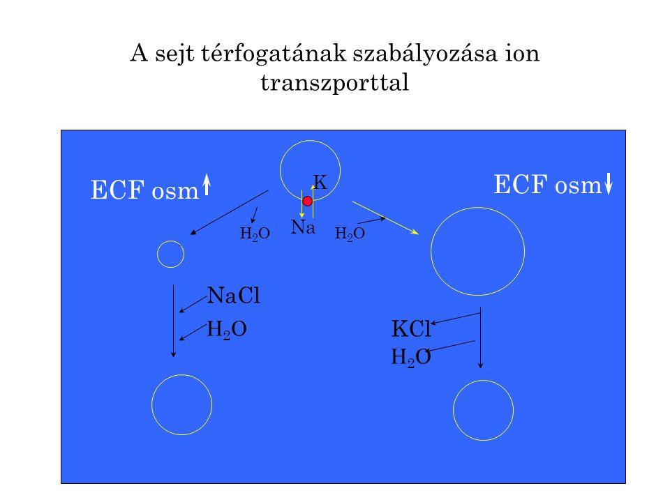 A sejt térfogatának szabályozása ion transzporttal