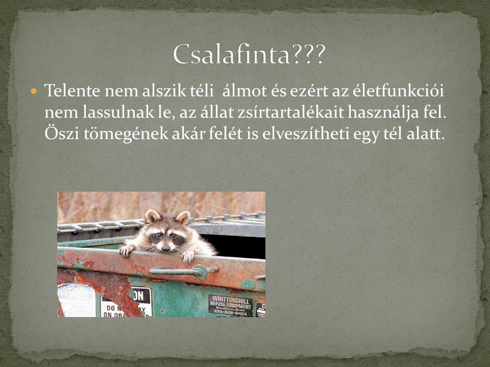 Csalafinta