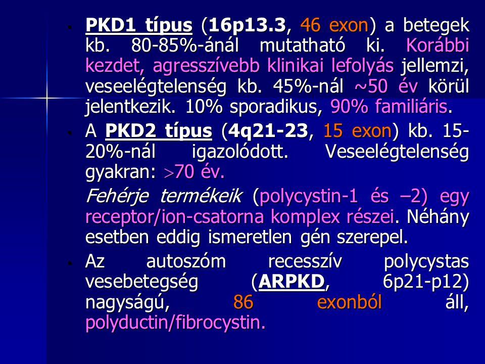 PKD1 típus (16p13. 3, 46 exon) a betegek kb. 80-85%-ánál mutatható ki