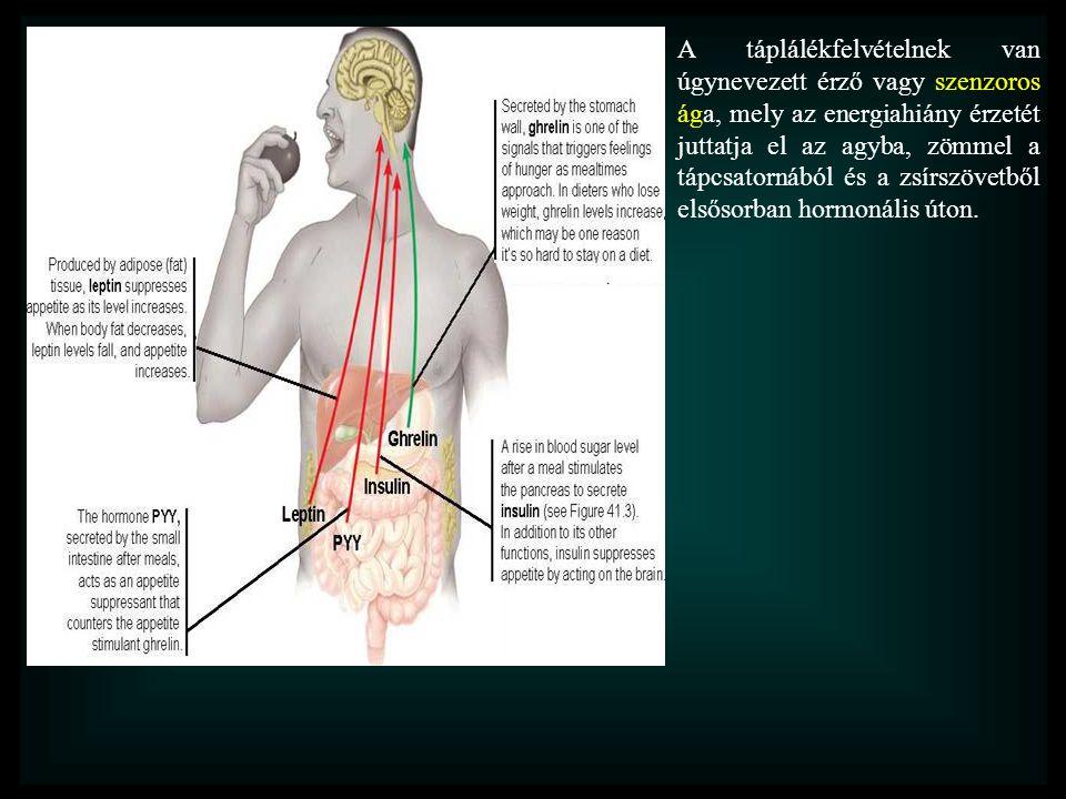 A táplálékfelvételnek van úgynevezett érző vagy szenzoros ága, mely az energiahiány érzetét juttatja el az agyba, zömmel a tápcsatornából és a zsírszövetből elsősorban hormonális úton.